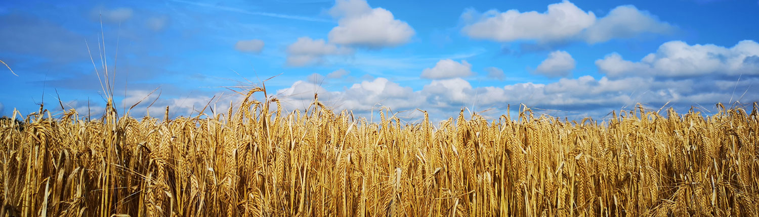 Golden Cornfield, Themis Wealth Management